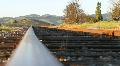 Vineyard Railroad Tracks Footage