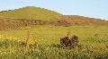 Napa Valley 2 Footage