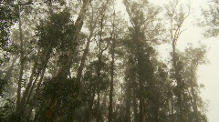 Maui, foggy forest, up-country Stock Footage