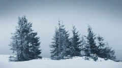 Fir trees in  winter, HD Stock Footage