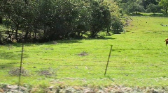 Cow Pasture Stock Footage