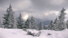 Winter fir trees in the mountains Stock Footage