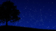 Tree at Night (Animated Background) Stock Footage