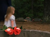 Stock Video Footage of Roses on Grave
