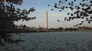 Stock Video Footage of Washington Monument Cherry Blossom