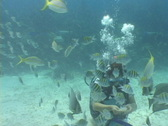 Stock Video Footage of Scuba Diver plays with Fish Angelfish