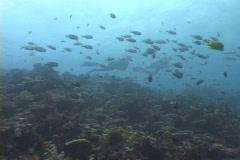 Scuba Diver Stock Footage