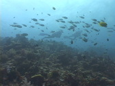 Stock Video Footage of Scuba Diver