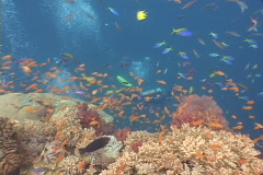 Scuba diver, Fish and coral reef in Fiji - colorful Stock Footage