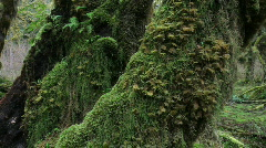 Hall of Mosses Stock Footage