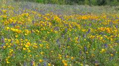 Wildflower Wonder Stock Footage
