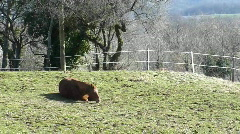 Horse lying on the grass Stock Footage
