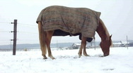 Stock Video Footage of Horse eating by winter time