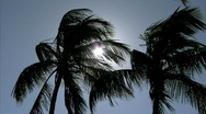 Stock Video Footage of The Sun Breaks Through The Palm Tree