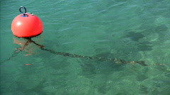 The Red Buoy Stock Footage