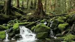 Olympic National Park river in lush temperate rainforest, Washington state - stock footage