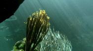 The Deep Sea Stock Footage