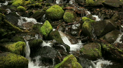 Olympic National Park river Stock Footage