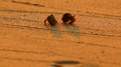Two hermit crabs passing each other Stock Footage