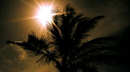 Stock Video Footage of The Sun behind a Bermudan Palm Tree