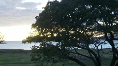 Sunset behind tree, timelapse Stock Footage