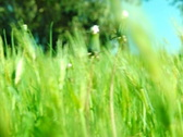 High Speed Camera Grassy Hill 02 SteadyCam Slow Motion x7 Loop Stock Footage