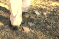 Hiking on rugged terrain - NTSC - stock footage