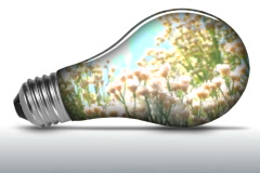 Wild flowers inside light bulb - NTSC Stock Footage