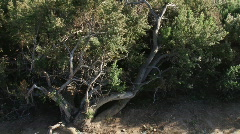 Bushes and ocean view - Malibu, Ca. Stock Footage