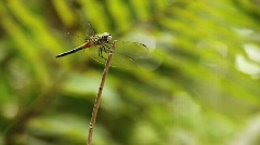 Dragonfly2 Stock Footage