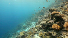 Diving along an intact coral reef Stock Footage