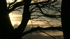 Fehmarn Sunset Trees Stock Footage