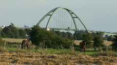 Fehmarn Sund Bridge Horses Stock Footage