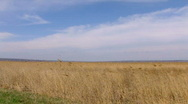 Stock Video Footage of Windy weather. Field of rush, cane, reed. Steppe
