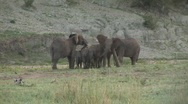 Stock Video Footage of protecting elephants