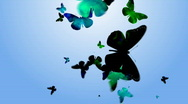 BUTTERFLY 1 Stock Footage