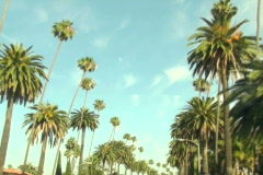 Beverly Hills palm trees V2 - NTSC - stock footage