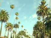 Stock Video Footage of Beverly Hills palm trees V2 - NTSC
