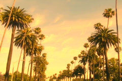Beverly Hills palm trees sunset V1 - NTSC - stock footage