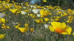 Wildflower View Stock Footage