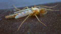 T179 catis fly bug insect water Stock Footage