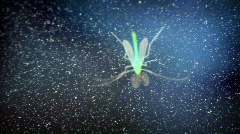 t179 biolumenessecne biolume biology insect glowing glow bug - stock footage