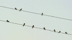 Swallows resting on the wire Stock Footage
