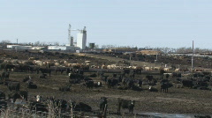 P00948 Large Cattle Feedlot in Nebraska Stock Footage