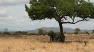Stock Video Footage of Elephants Under Tree Shade in Tanzania