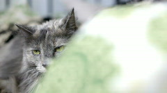 Gray cat in bed with green blanket Stock Footage