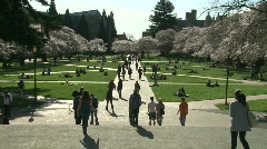 WS UW cherry blossoms court - stock footage