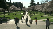 Stock Video Footage of WS UW cherry blossoms court