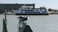 Seagulls And Boat Stock Footage