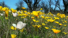 Wildflower POV Stock Footage